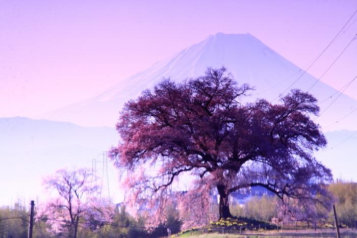 令和2年4月の富士 (2) 韮崎市わに塚の桜と富士_e0344396_15201569.jpg