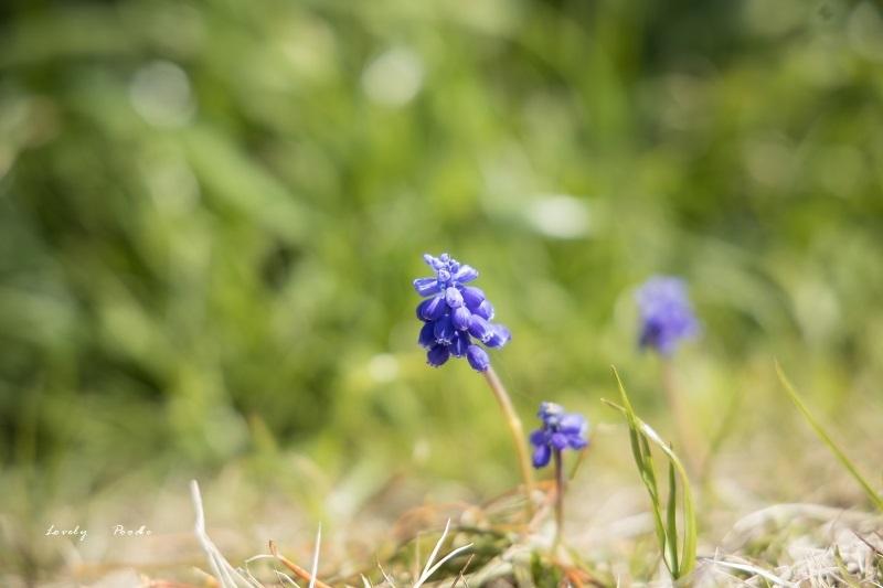 小さな春の喜び ♪_d0257606_09344663.jpg