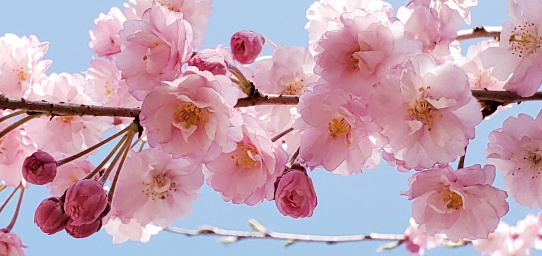 クリエイティブシード~開花編~「創造性の開花~よろこびのままに自由に生きる~」_f0006208_21185419.jpg
