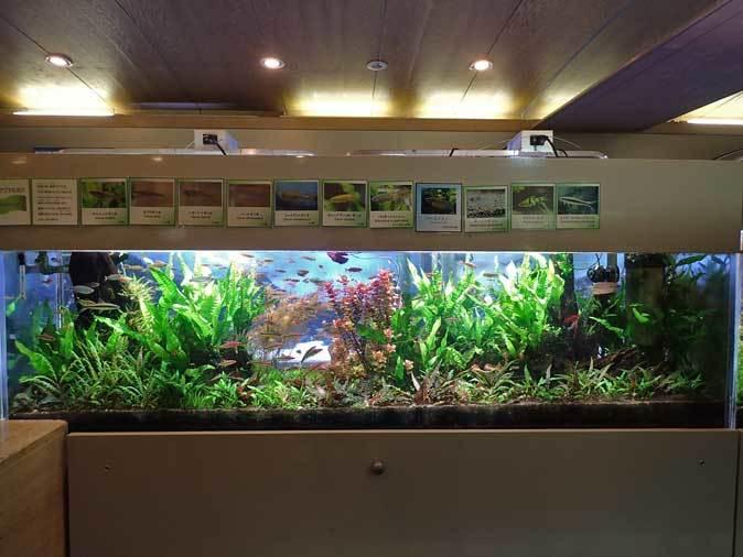 板橋区立熱帯環境植物館:東南アジアの河川~水中のジャングル~【前編】_b0355317_20374015.jpg