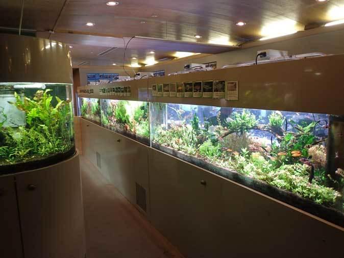 板橋区立熱帯環境植物館:東南アジアの河川~水中のジャングル~【前編】_b0355317_20392351.jpg