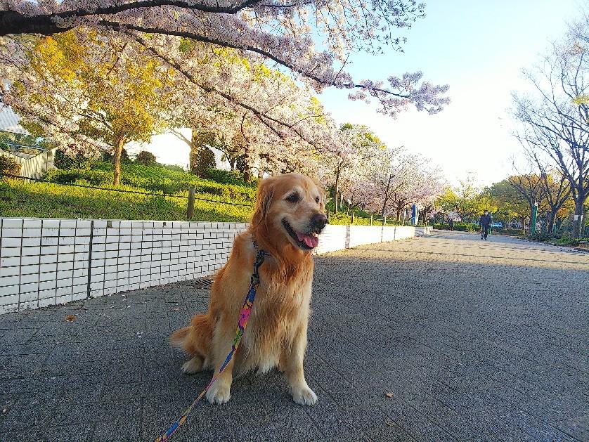 散歩はありです。_a0098418_14075626.jpg