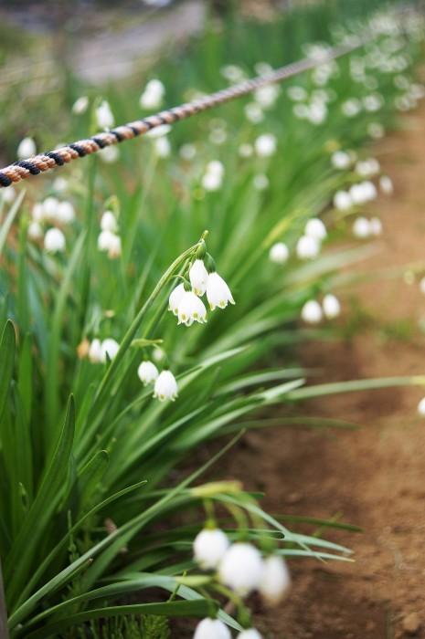 ■園芸【Myファームの花達】_b0033423_22430629.jpg