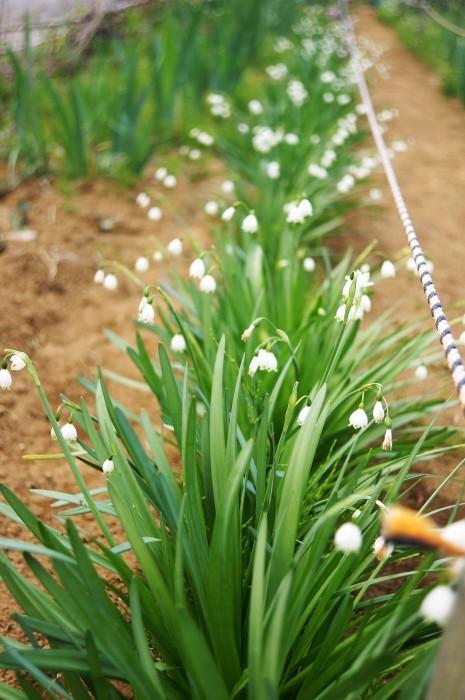 ■園芸【Myファームの花達】_b0033423_22432295.jpg