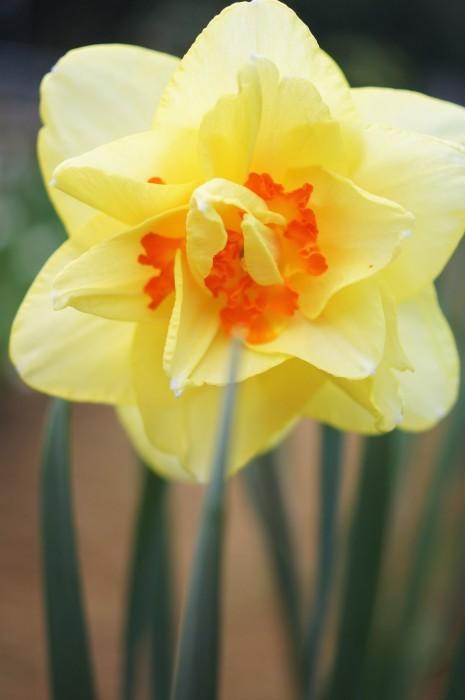 ■園芸【Myファームの花達】_b0033423_22442163.jpg