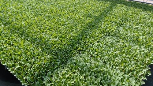 今年もブログ初め。全く読めない今年の農業。_e0335330_17333567.jpg