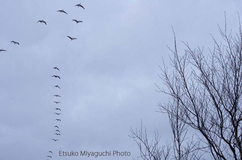 春を連れて渡り鳥_f0152939_14334135.jpg