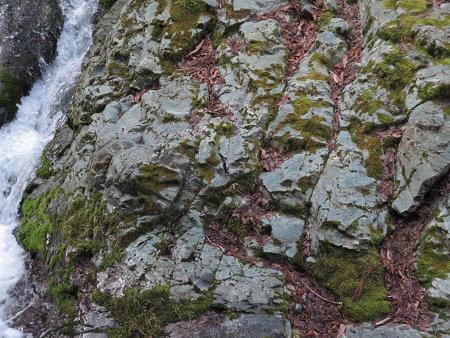 ツキノワグマ爪痕の樹とキツネの糞【台高】4/4_d0387443_09291317.jpg