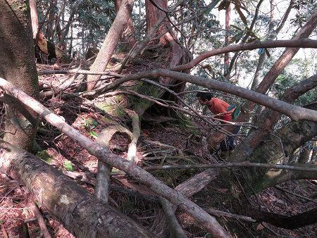 ツキノワグマ爪痕の樹とキツネの糞【台高】4/4_d0387443_09331584.jpg