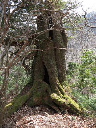 ツキノワグマ爪痕の樹とキツネの糞【台高】4/4_d0387443_09331962.jpg