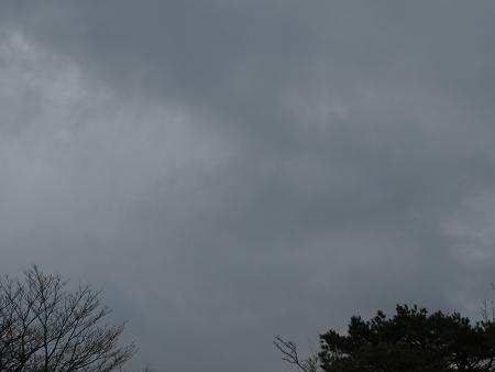 ツキノワグマ爪痕の樹とキツネの糞【台高】4/4_d0387443_09331982.jpg