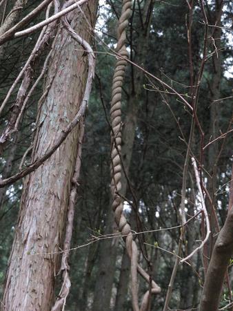 ツキノワグマ爪痕の樹とキツネの糞【台高】4/4_d0387443_09332350.jpg