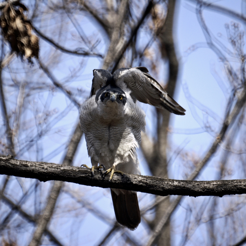 何時もの森で親鳥の鳴き声しきりと♬_a0324247_06143429.jpg