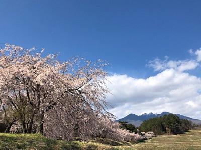 あっちもこっちも桜色_f0019247_2348335.jpg
