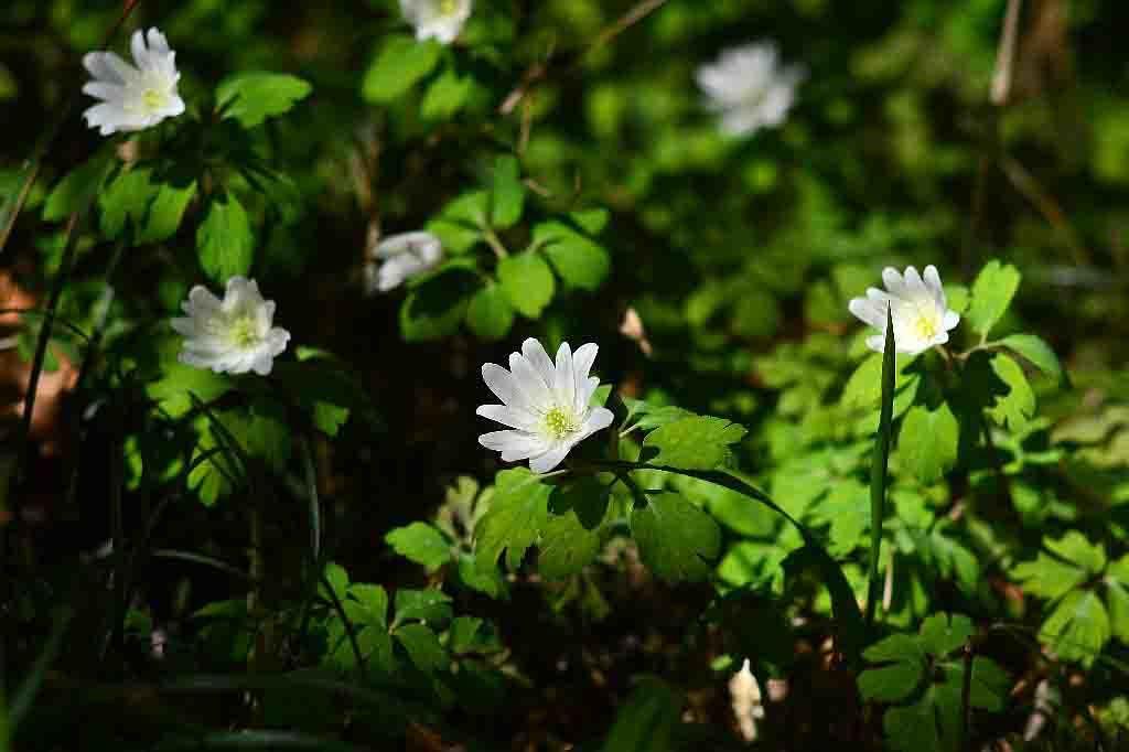白い花_e0307350_09404242.jpg