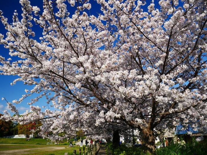 街の公園にて  2020-04-11 00:00   _b0093754_20403673.jpg