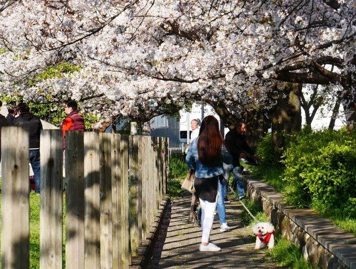 街の公園にて  2020-04-11 00:00   _b0093754_20410578.jpg