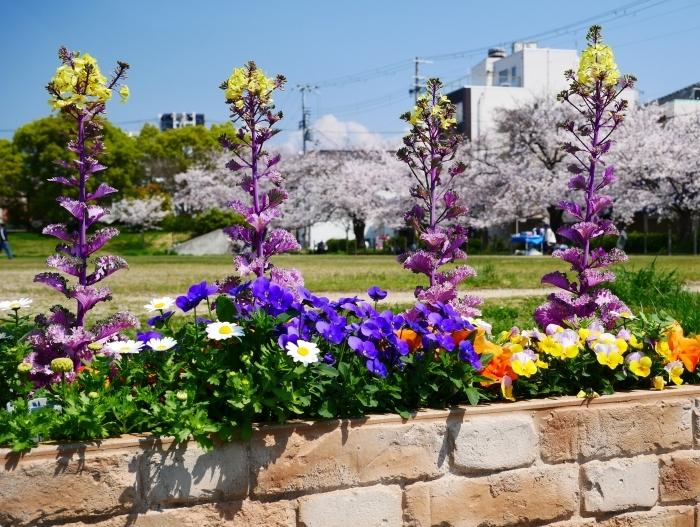 街の公園にて  2020-04-11 00:00   _b0093754_20424653.jpg