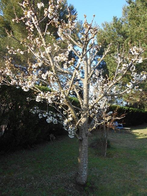 リンゴの花とサクランボの花_d0153860_13162681.jpg
