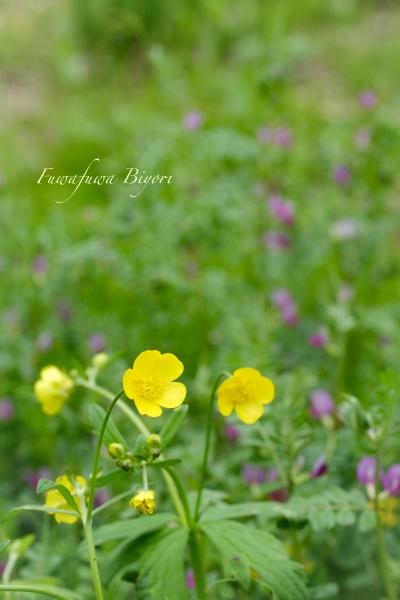 野の花 **_d0344864_21232121.jpg