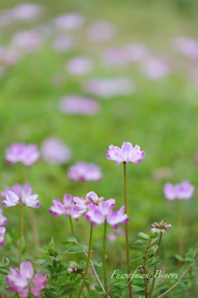 野の花 **_d0344864_21233739.jpg
