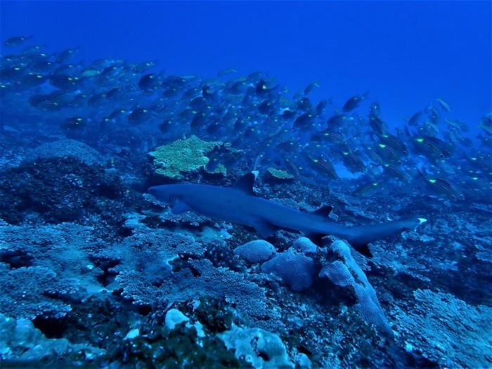 200410 駆潜艇ドスの効いた圧巻のオーラどす_a0335173_16021883.jpg