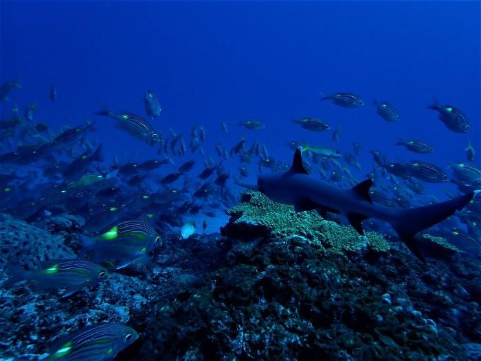 200410 駆潜艇ドスの効いた圧巻のオーラどす_a0335173_16022297.jpg