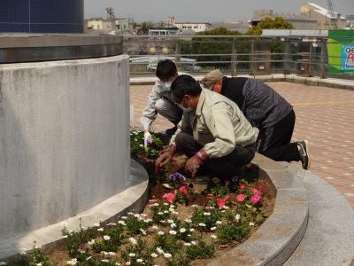 名古屋港水族館前花壇の植栽R2.4.8_d0338682_15293108.jpg