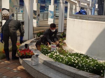 名古屋港水族館前花壇の植栽R2.4.8_d0338682_15324368.jpg