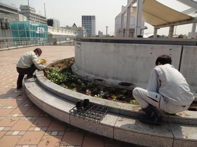 名古屋港水族館前花壇の植栽R2.4.8_d0338682_15330252.jpg