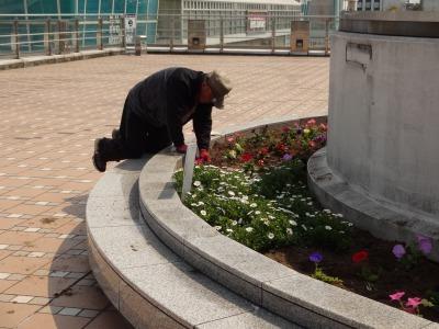 名古屋港水族館前花壇の植栽R2.4.8_d0338682_15331585.jpg