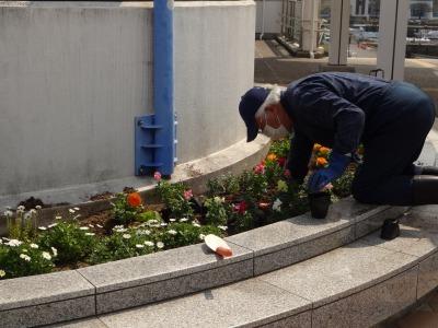 名古屋港水族館前花壇の植栽R2.4.8_d0338682_15332178.jpg