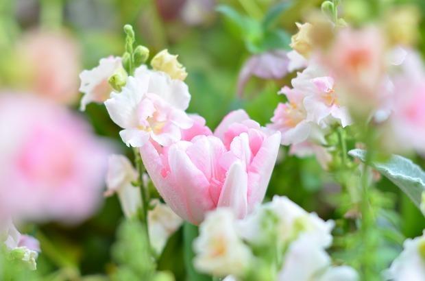 春の庭 2020  そして今思うこと_d0025294_19053199.jpg