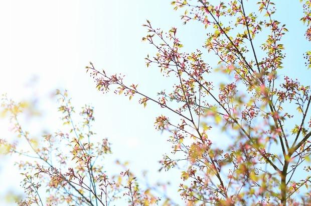 春の庭 2020  そして今思うこと_d0025294_19064070.jpg