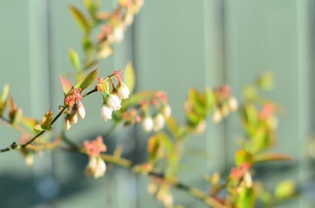 春の庭 2020  そして今思うこと_d0025294_19075025.jpg