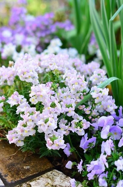 春の庭 2020  そして今思うこと_d0025294_19082475.jpg