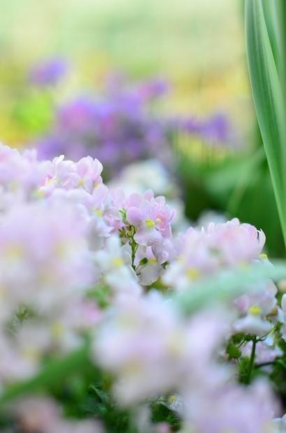 春の庭 2020  そして今思うこと_d0025294_19084372.jpg