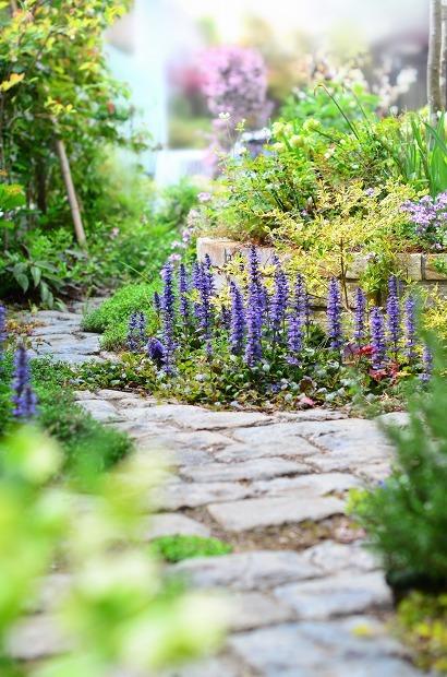 春の庭 2020  そして今思うこと_d0025294_21330658.jpg