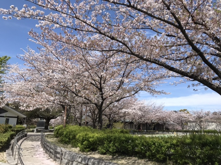 今日の名古屋能楽堂前の小径_e0026495_23421113.jpeg