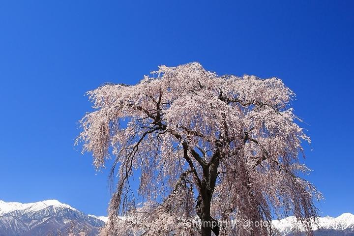 春_b0190100_04041604.jpg