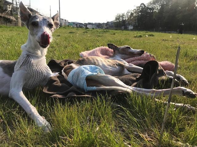 先住犬たちは今年で14才と15才_f0242002_22273215.jpg