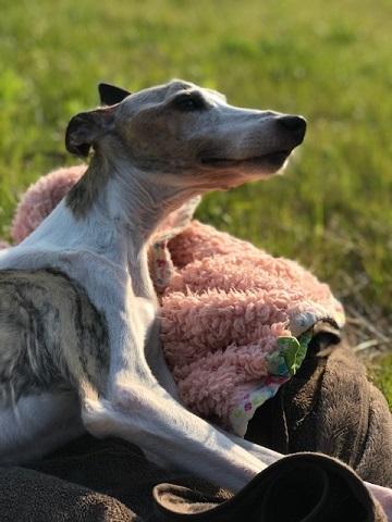 先住犬たちは今年で14才と15才_f0242002_22290700.jpg