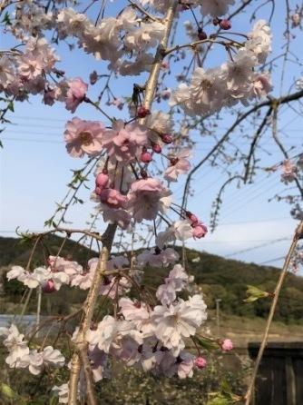 木の芽時_a0346704_18263662.jpg