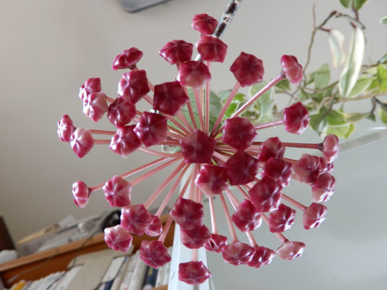次々と花が咲きます_c0025115_21345521.jpg