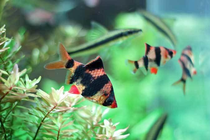 板橋区立熱帯環境植物館:東南アジアの河川~水中のジャングル~【後編】_b0355317_10465243.jpg