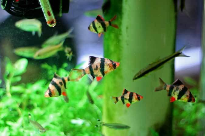 板橋区立熱帯環境植物館:東南アジアの河川~水中のジャングル~【後編】_b0355317_10525809.jpg