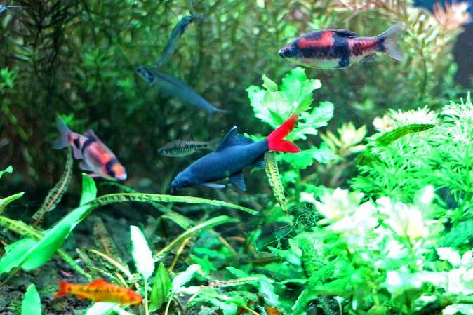 板橋区立熱帯環境植物館:東南アジアの河川~水中のジャングル~【後編】_b0355317_11022496.jpg