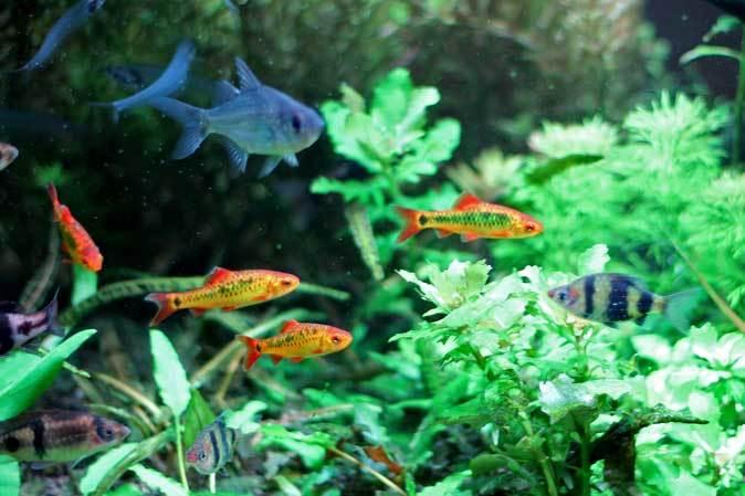 板橋区立熱帯環境植物館:東南アジアの河川~水中のジャングル~【後編】_b0355317_11214769.jpg