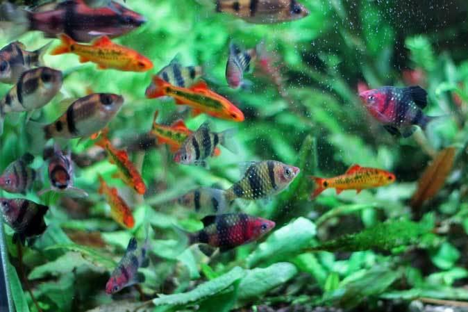 板橋区立熱帯環境植物館:東南アジアの河川~水中のジャングル~【後編】_b0355317_11230932.jpg