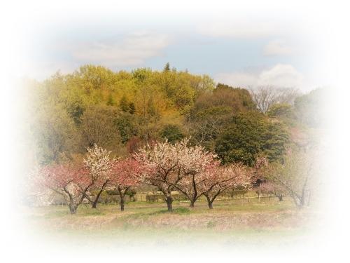 桃の花咲く吉備路_c0026824_14333018.jpg